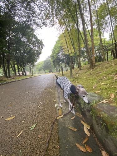 最近のお散歩スタイル。_e0141909_19422318.jpeg