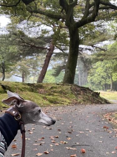 最近のお散歩スタイル。_e0141909_19432169.jpeg