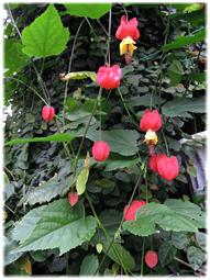 花の名前_d0221430_13424912.jpg