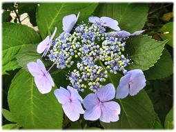 梅雨は植物の美しさが際立つとき_d0221430_13440717.jpg