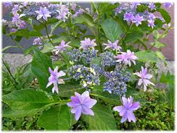 梅雨は植物の美しさが際立つとき_d0221430_13442322.jpg