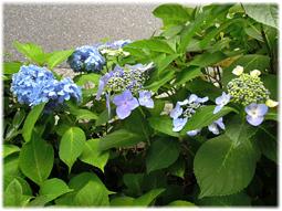 梅雨は植物の美しさが際立つとき_d0221430_15460206.jpg