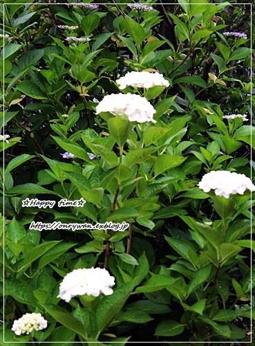 6月14日作りおきと庭から・・・あれ?なんでだろう?・・♪_f0348032_17304883.jpg