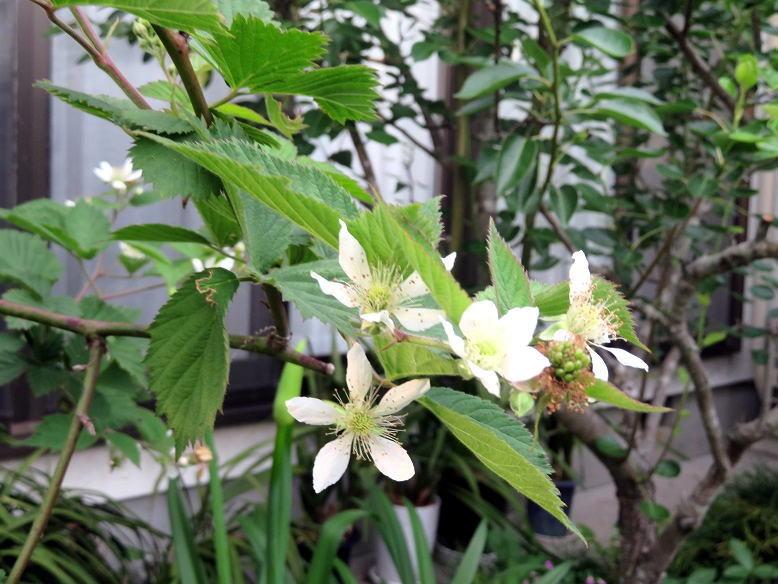 梅雨入りの庭で_b0089338_23174492.jpg