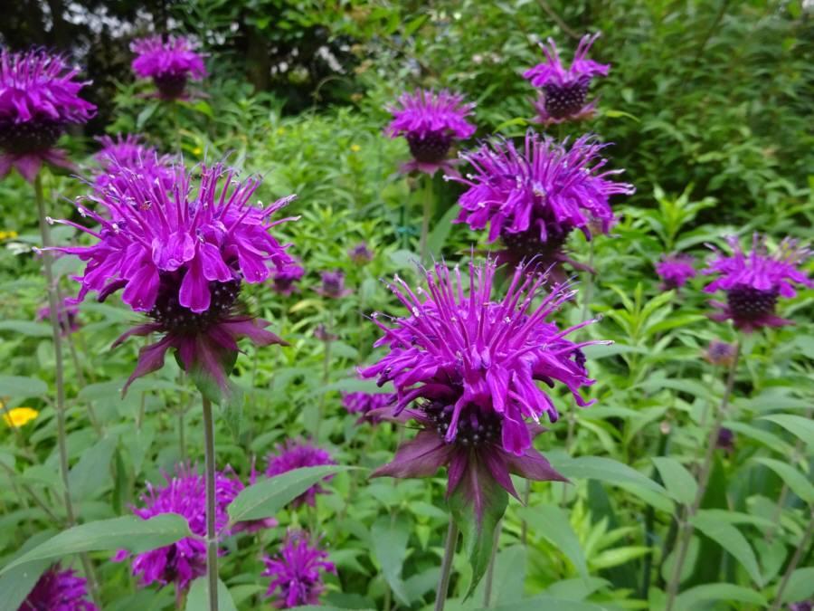 庭の花 夏その2_f0059673_22185170.jpg