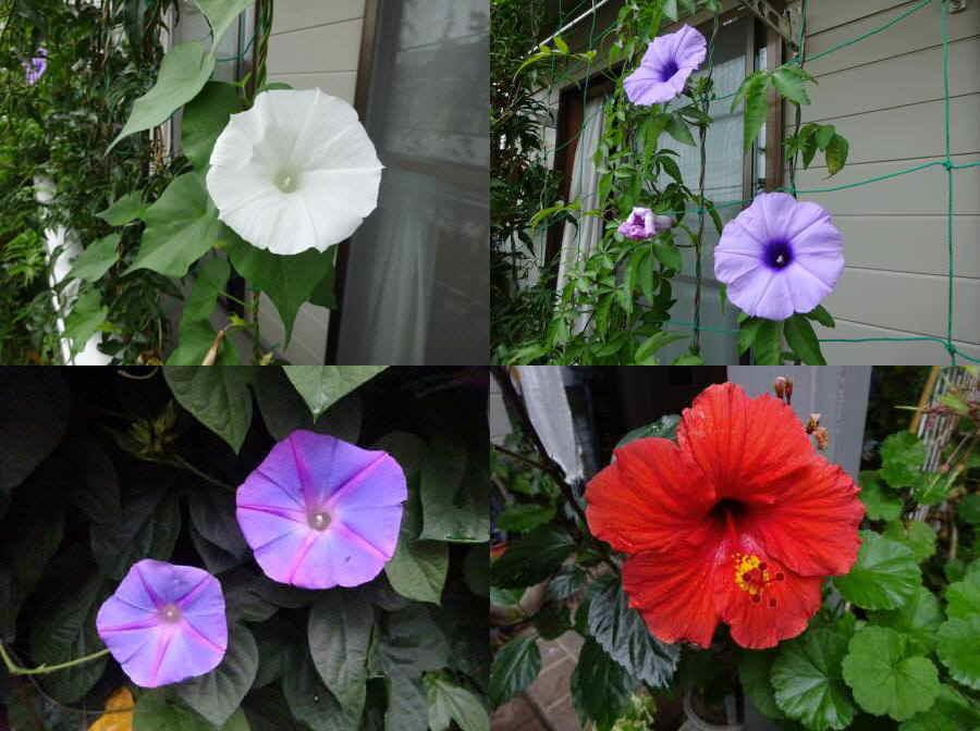 庭の花 夏その2_f0059673_22190853.jpg