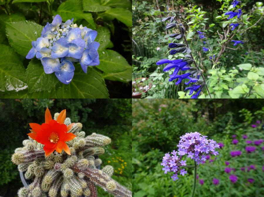 庭の花 夏その2_f0059673_22202902.jpg