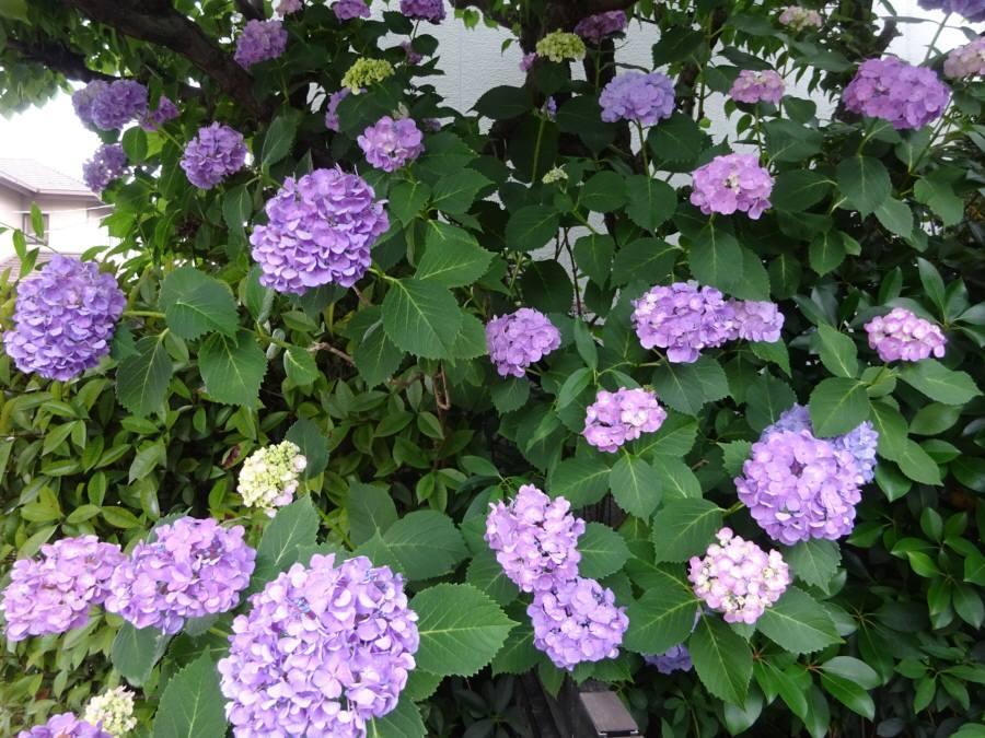 庭の花 夏その2_f0059673_22485401.jpg