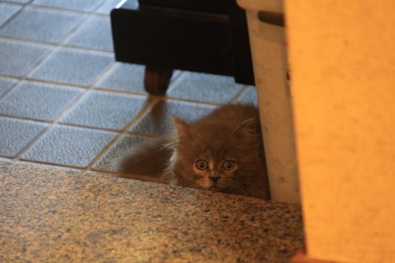 子猫の情景_f0075075_10083908.jpg