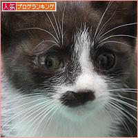 子猫がやってきた!_a0389088_06084265.jpg