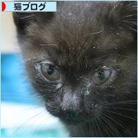 子猫がやってきた!_a0389088_06084277.jpg