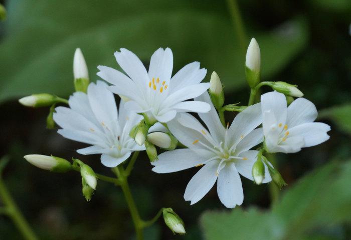 白い花_d0162994_05431067.jpg