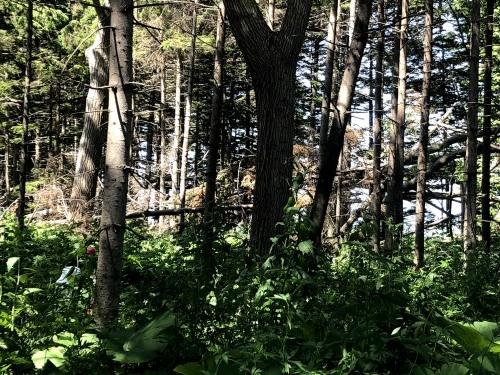 6/13(土)江別市の防風林 林風倒木・掛木処理_c0173813_14280080.jpg