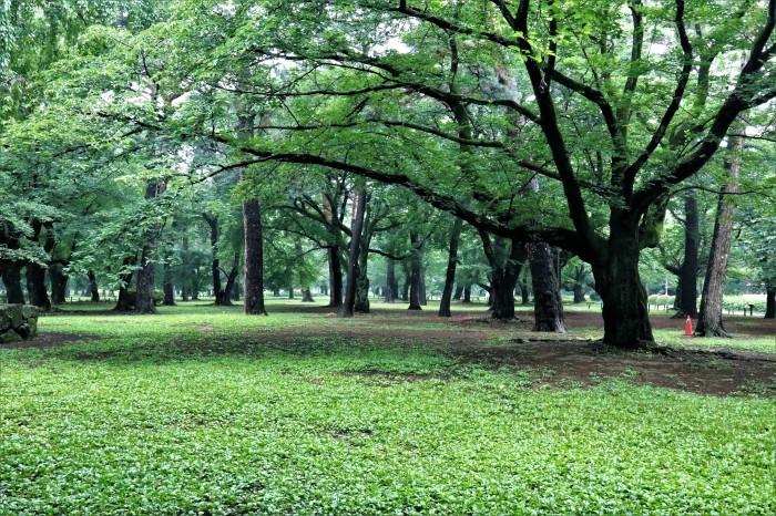 早朝散歩の大宮公園に「ハクビシン」が....。_d0150720_12460002.jpg