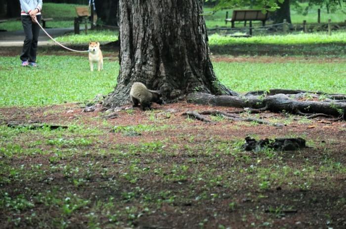 早朝散歩の大宮公園に「ハクビシン」が....。_d0150720_12463187.jpg