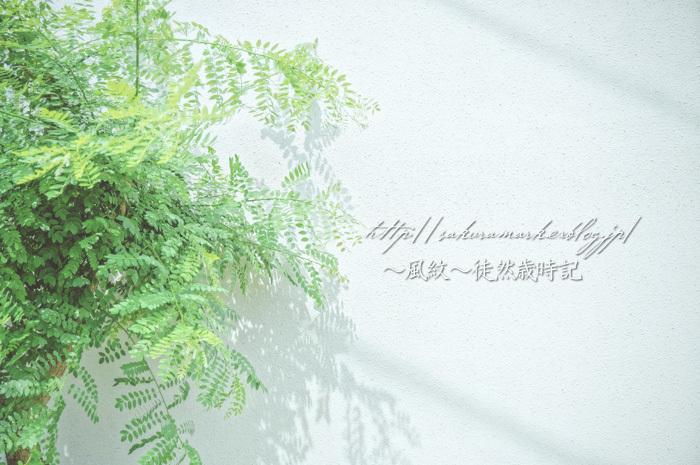 6月のグリーン。_f0235723_16144214.jpg