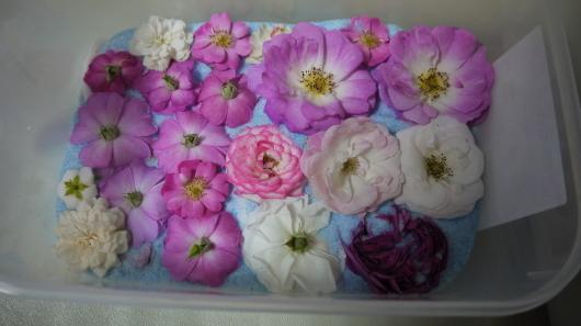 庭の薔薇をドライフラワーに・キャントルにします_a0123133_14245376.jpg