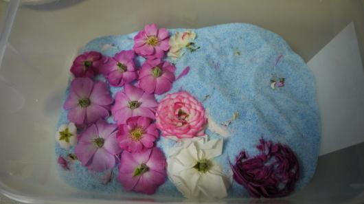 庭の薔薇をドライフラワーに・キャントルにします_a0123133_14261345.jpg