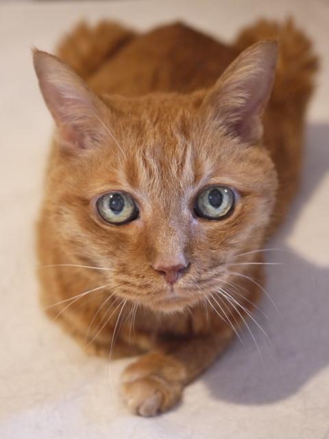 お誕生日猫 しぇる17歳編。_a0143140_21033333.jpg