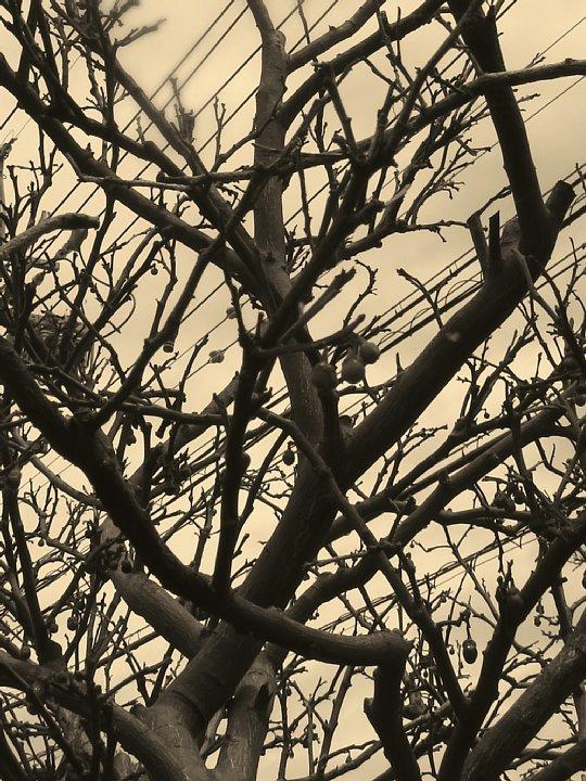2020年6月25日 八朔の木が枯れました  !(^^)!_b0341140_17581784.jpg