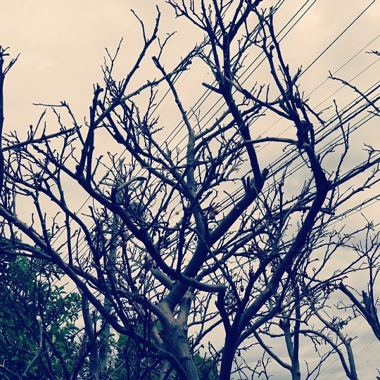 2020年6月25日 八朔の木が枯れました  !(^^)!_b0341140_17582521.jpg
