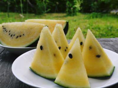 黒小玉スイカ「ひとりじめbonbon」黄色果肉は6月23日出荷分まで!赤果肉、メロンとのコンビも大人気!_a0254656_17024896.jpg