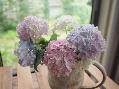 紫陽花とRain_a0335560_16102605.jpg