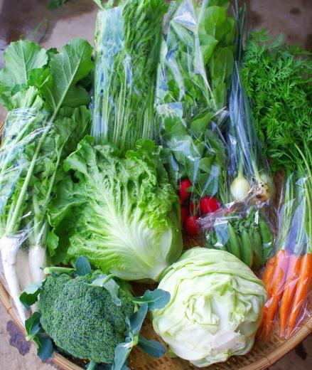 今週の野菜セット(6/16~6/20着)_c0110869_12303083.jpg