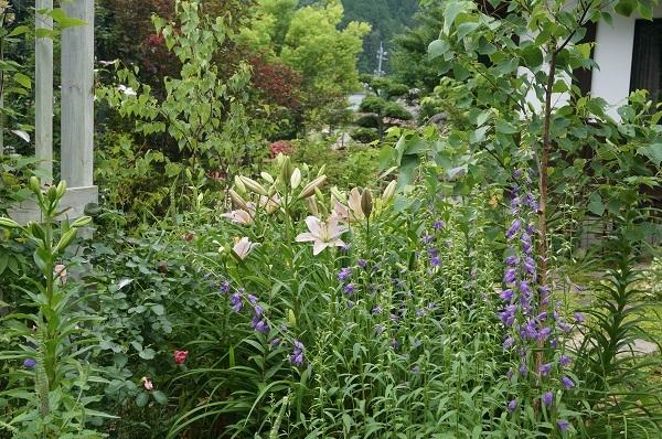 雨上がりの庭_e0365880_22271134.jpg