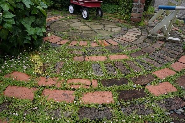 雨上がりの庭_e0365880_22280307.jpg