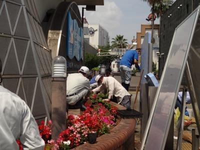 ガーデンふ頭総合案内所前花壇の植替えR2.6.15_d0338682_16395346.jpg