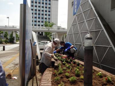 ガーデンふ頭総合案内所前花壇の植替えR2.6.15_d0338682_16402411.jpg