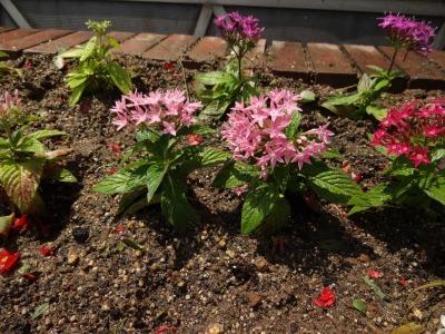 ガーデンふ頭総合案内所前花壇の植替えR2.6.15_d0338682_16590064.jpg