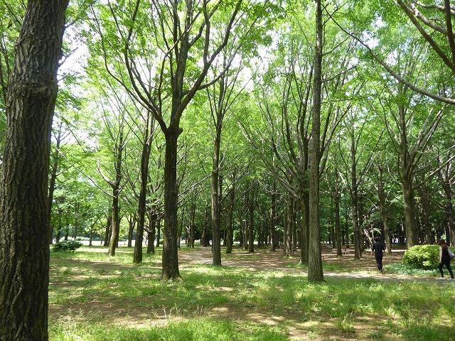 代々木公園でお弁当デビュー♪ 2か月の外出自粛だったので、すごくリラックスしたよ♪_b0287088_21285763.jpg