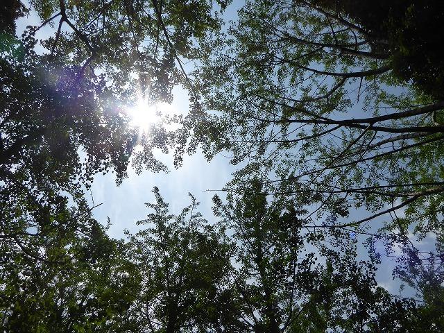 代々木公園でお弁当デビュー♪ 2か月の外出自粛だったので、すごくリラックスしたよ♪_b0287088_21292209.jpg