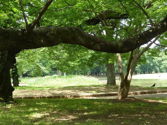 代々木公園でお弁当デビュー♪ 2か月の外出自粛だったので、すごくリラックスしたよ♪_b0287088_21294793.jpg