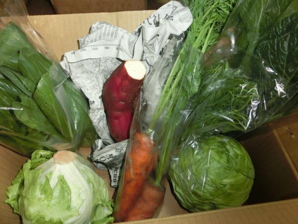 自然栽培の野菜_a0391592_17212604.jpg