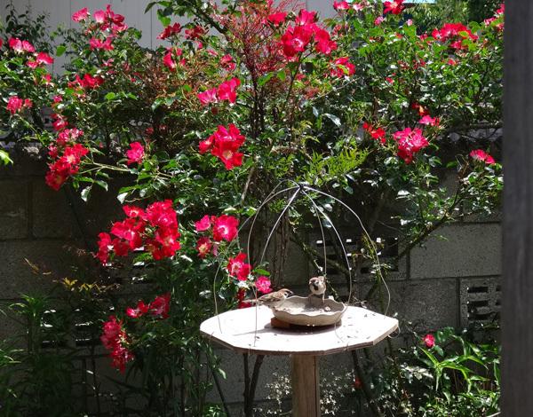 ニッコウキスゲ、タータン麦、モリモリ咲いてるバイカウツギなど♪_a0136293_14174090.jpg