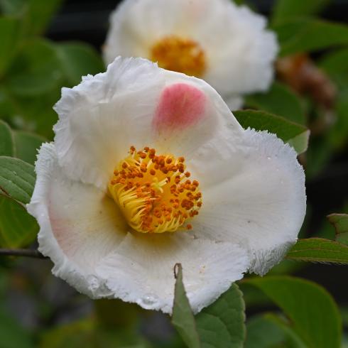 初夏の花 02_f0099102_10011922.jpg