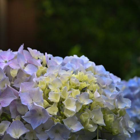 初夏の花 02_f0099102_10012865.jpg