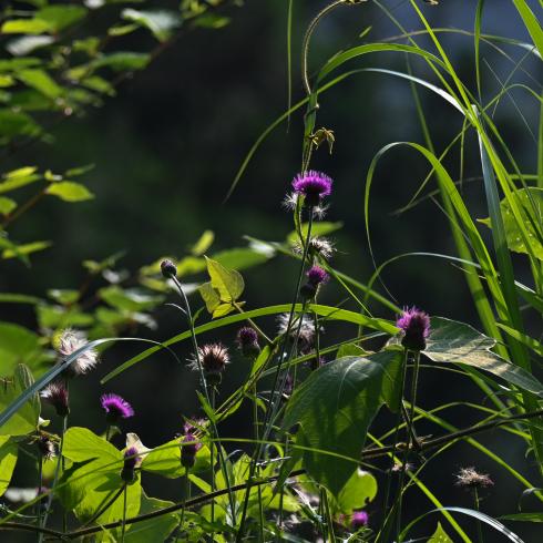 初夏の花 02_f0099102_10021581.jpg