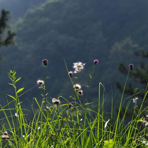 初夏の花 02_f0099102_10022792.jpg