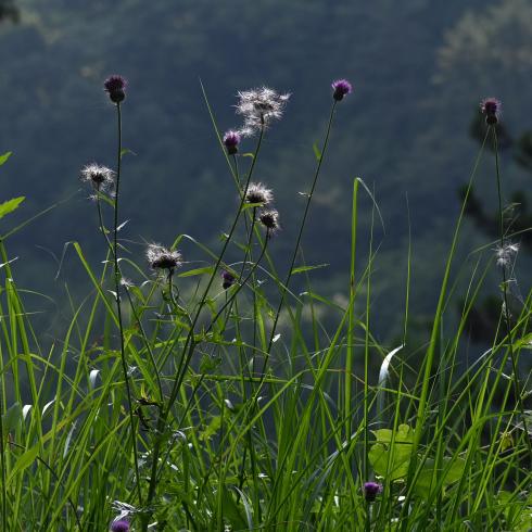 初夏の花 02_f0099102_10023484.jpg