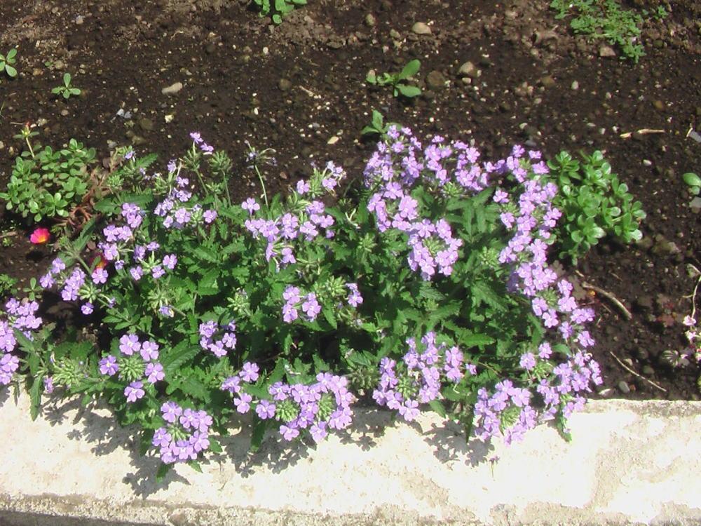 花と野菜 6月 2020-6-16_c0335218_07474488.jpg