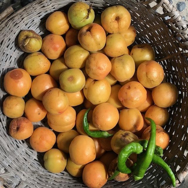 杏の収穫_e0226943_22402860.jpg