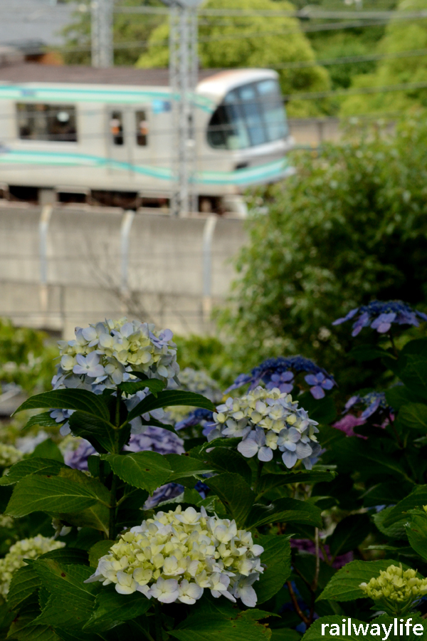 紫陽花と目黒線_f0113552_22433505.jpg