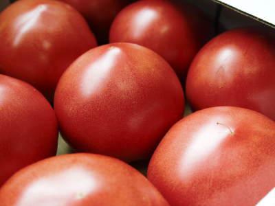 樹上完熟の朝採りトマト 本日より令和2年の予約受付スタートしました!初回出荷は6月23日(火)です!_a0254656_19201237.jpg