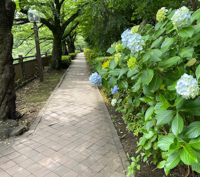 walking   知らぬ間に埼京線を越えて!_a0165160_18121751.jpg