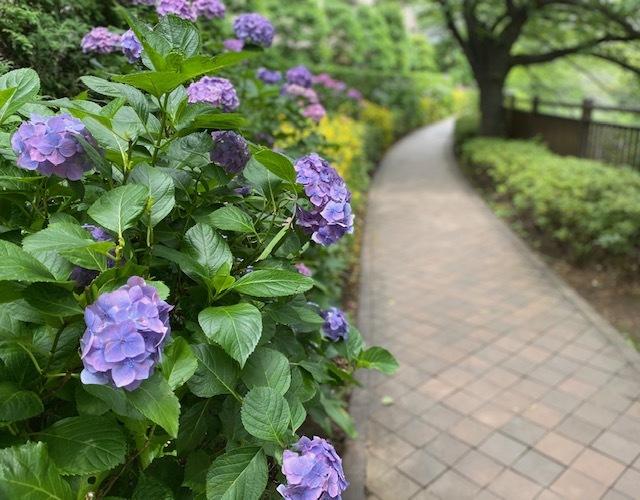 walking   知らぬ間に埼京線を越えて!_a0165160_18172643.jpg