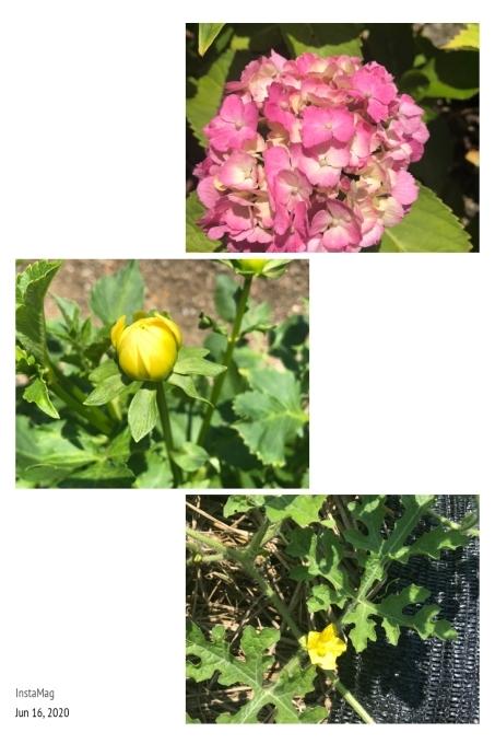 我が家の庭を見ると、、、♪_b0328361_22325563.jpg